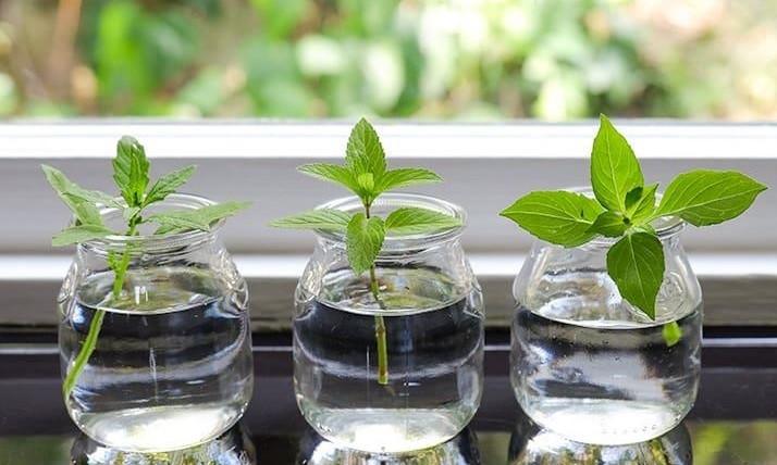 کاشت بذر درون شیشه