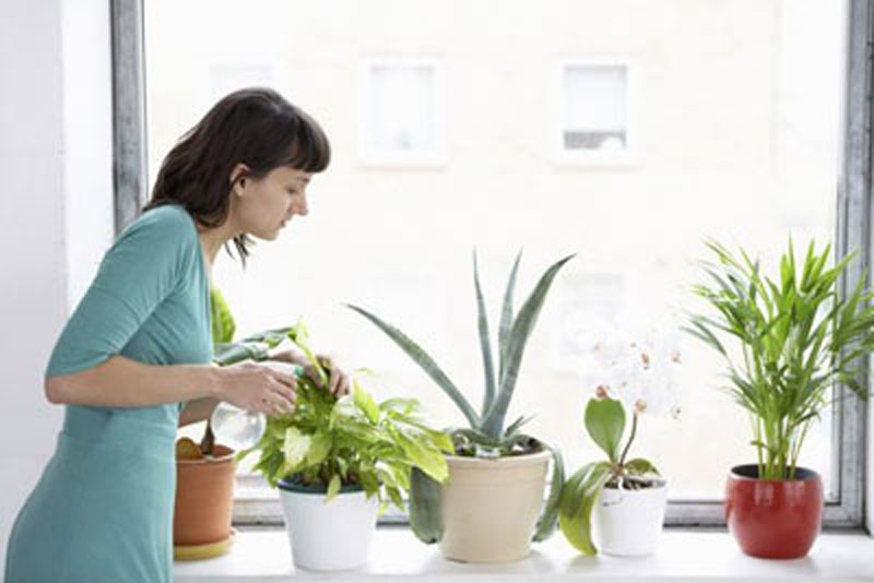آبیاری گیاهان آپارتمانی
